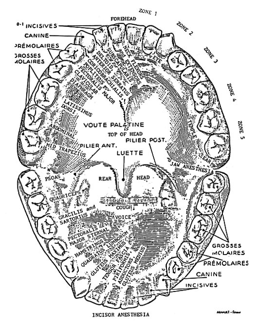 dental reflexology chart